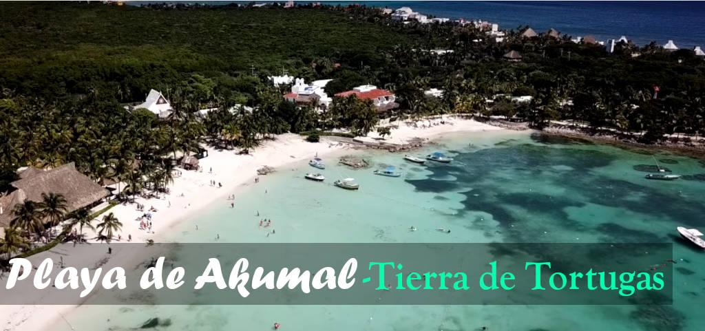 Playa de Akumal, playa de akumal mexico, playa mexico, playa akumal tortugas
