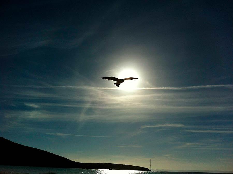 Ave Playa Balandra, pájaro playa balandra, ave sendero balandra, pájaro sendero balandra